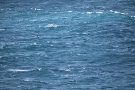 Seawatching heaven (Dominic Couzens)