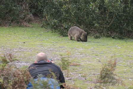 Mike Unwin and Common Wombat (Dominic Couzens)